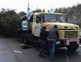 В Киеве снесли елку