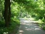 В Киеве обновление 128 парки и сады